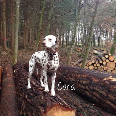Hundehalsband-Leder-Cara-2