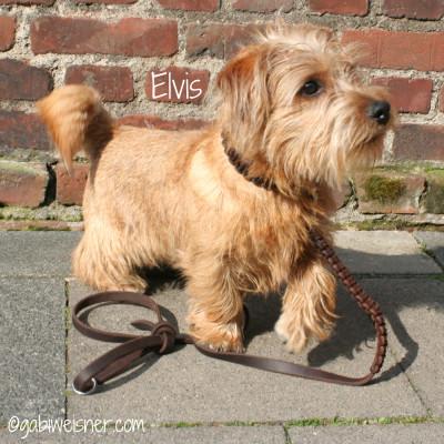Hundehalsband Leder Elvis