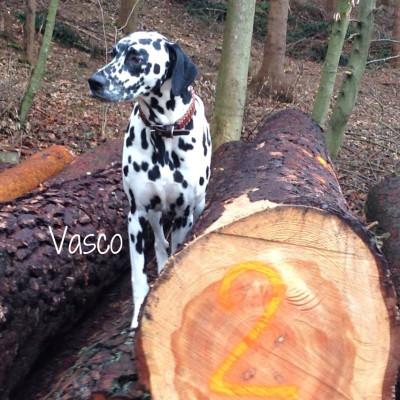Hundehalsband-Leder-Vasco-1