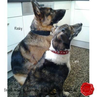 Hundehalsband-Lederhalsband-Rocky-und-Luna