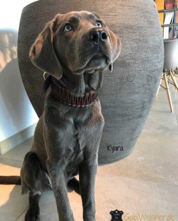 Hundehalsband, Leder, Hundehalsbänder, Lederhalsband, breit, geflochten