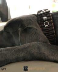 hundehalsband-original-knotenhalsband-geflochten-kyara