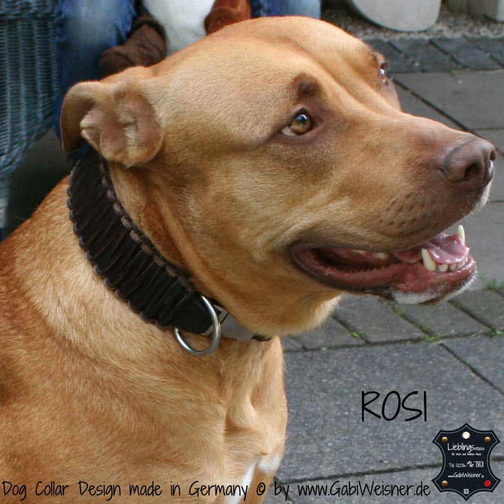 Hundehalsband-Leder-rosi-2