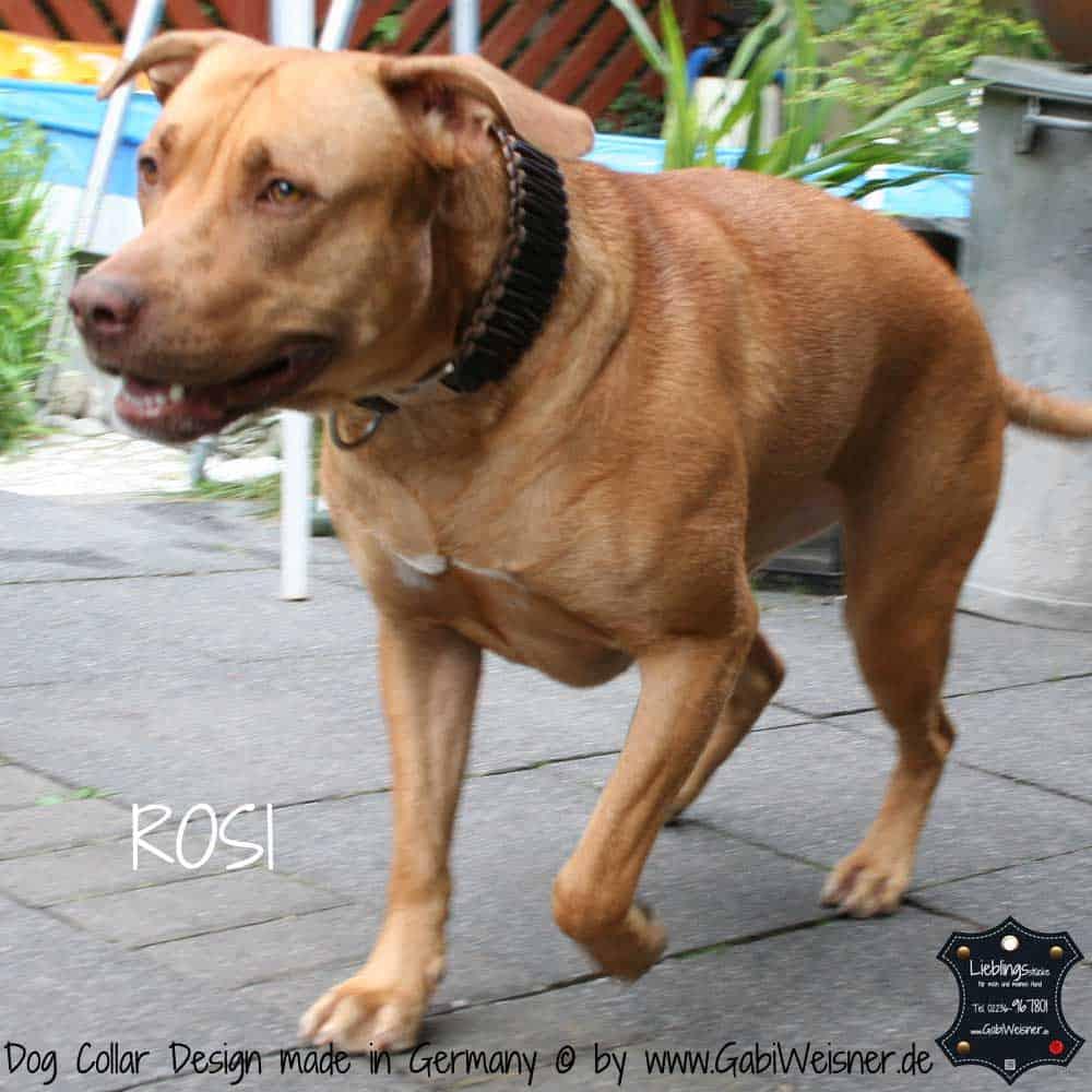 Hundehalsband-Leder-rosi-4