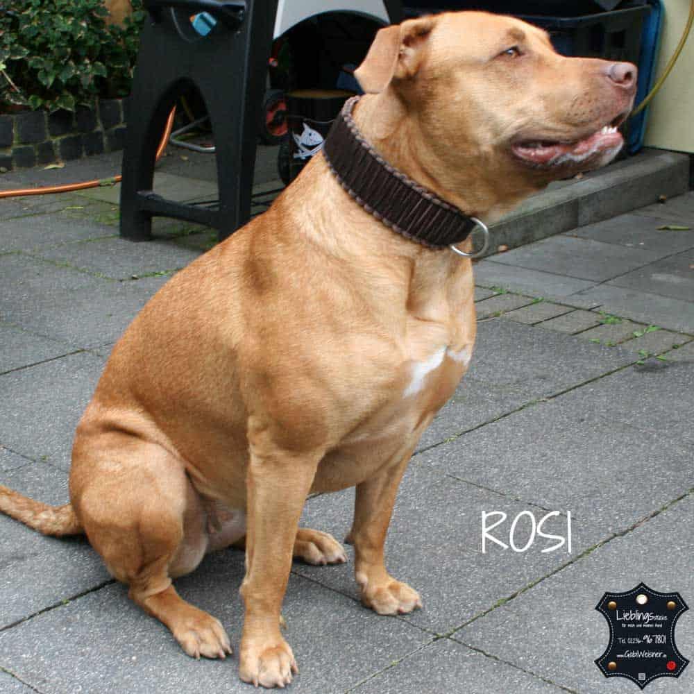 Hundehalsband-Leder-rosi-5