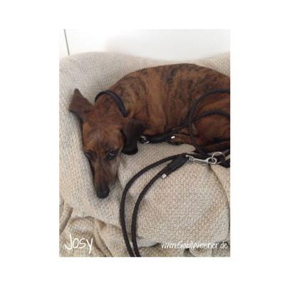 Lederhalsband-für-kleine-Hunde-im-Set-Josy