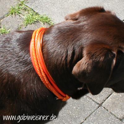 Hundehalsband-Leder-4-reihig-Tula
