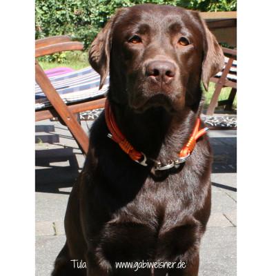 Hundehalsband-Leder-6-reihig-orange-Tula-1