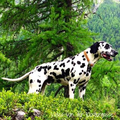 Hundehalsband-Leder-Nappaleder-Mix-Cognac-2
