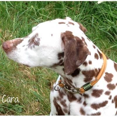 Hundehalsband-Leder-Nappaleder-Mix-Cognac-5