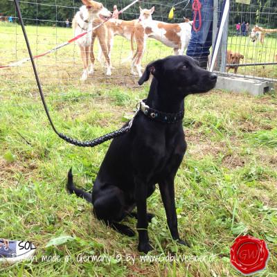 Hundehalsband-Leder-Knotenhalsband-türkise-Nieten-SOL-2