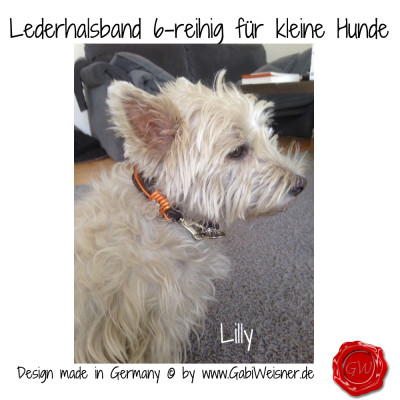 Lederhalsband-6-reihig-für-kleine-Hunde-Lilly-Queeny-2