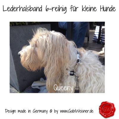 Lederhalsband-6-reihig-für-kleine-Hunde-Lilly-Queeny-7