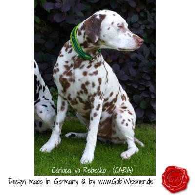 Hundehalsband-Leder-6-reihig