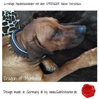 Hundehalsband-Leder-6-reihig-SPRENGER-HAKEN-GABIWEISNER-3