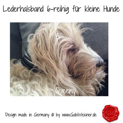 Lederhalsband-6-reihig-für-kleine-Hunde-Lilly-Queeny-4