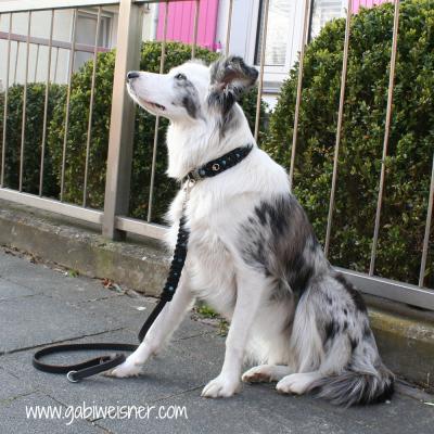 Hundehalsband-Leder-mit-türkisen-3