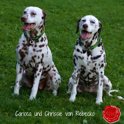 Carioca-und-Crissie-von-Rebecko
