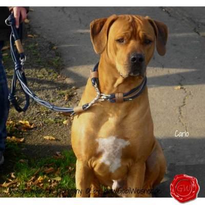Hundehalsband-Lederhalsband-Carlo-2