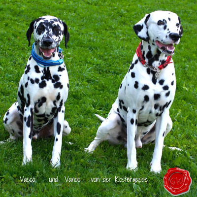 Vasco----und--Vanoc---von-der-Klostergasse