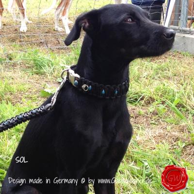 Hundehalsband-Leder-Knotenhalsband-türkise-Nieten-SOL