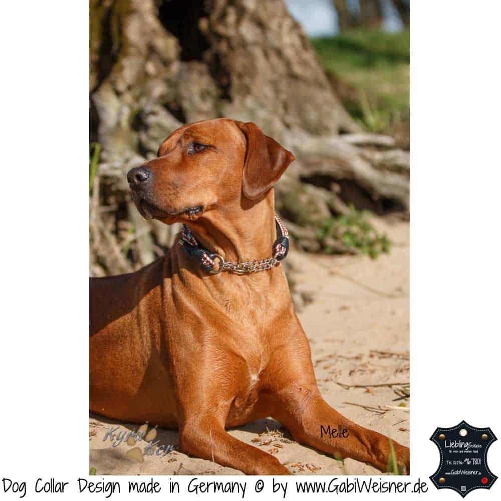 Hundehalsband-Leder-rot-weiß-melle-1