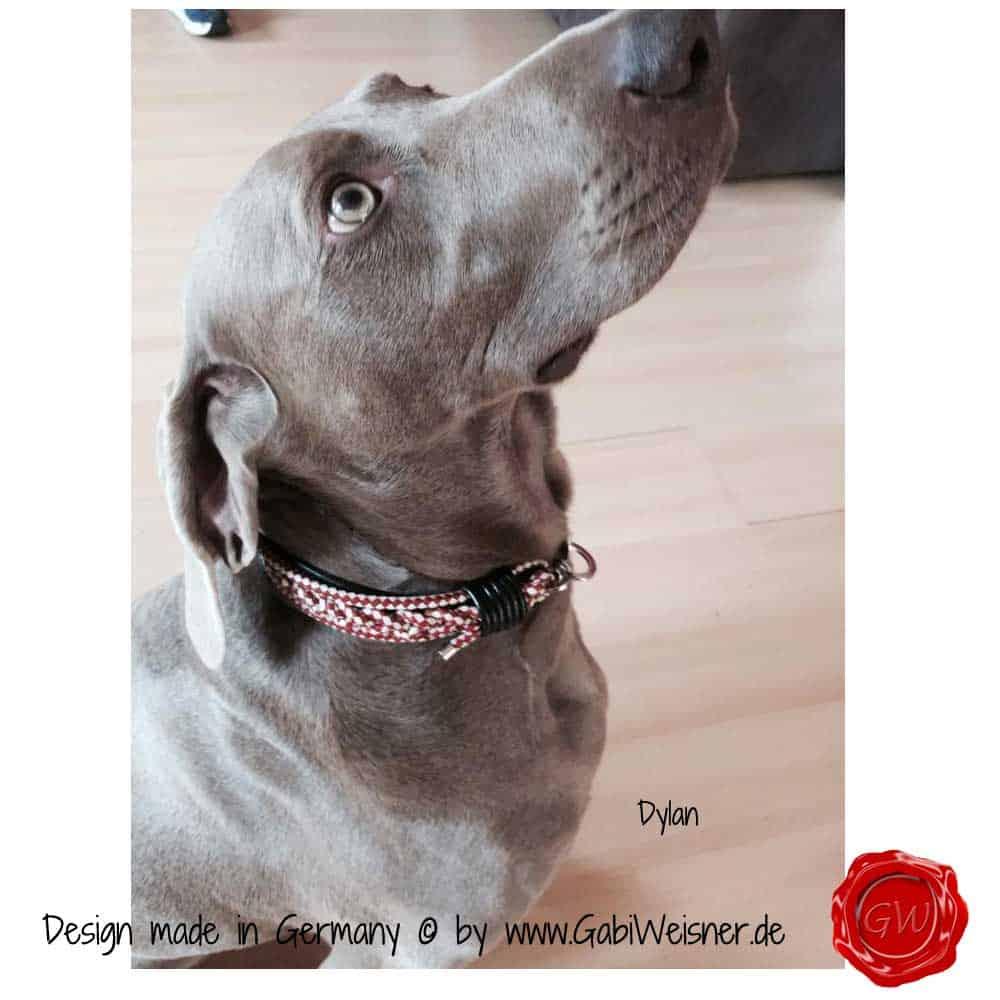 Hundehalsband-Lederhalsband-Dylan