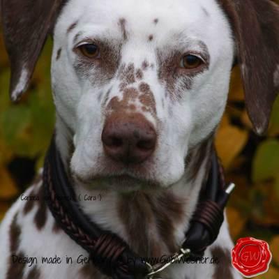 Hundehalsband-Leder-Mix-5-reihig-Olive-10