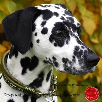 Hundehalsband-Leder-Mix-5-reihig-Olive-4