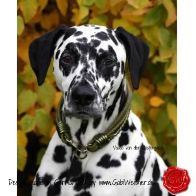 Hundehalsband-Leder-Mix-5-reihig-Olive-5