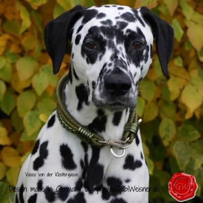 Hundehalsband-Leder-Mix-5-reihig-Olive-6