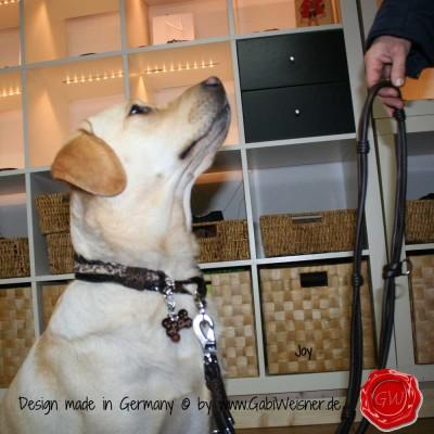 Hundehalsband-Lederhalsband-Joy-6