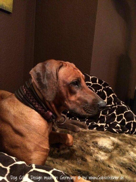 Hundehalsband 6 cm breit Leder Mix in Braun oder Schwarz