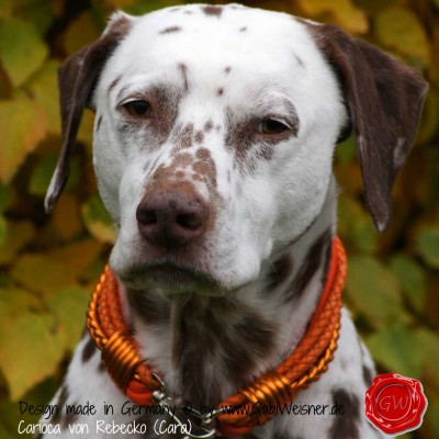 Hundehalsband Ledermix in Orange