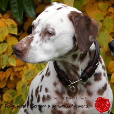 Hundehalsband Ledermix in Braun