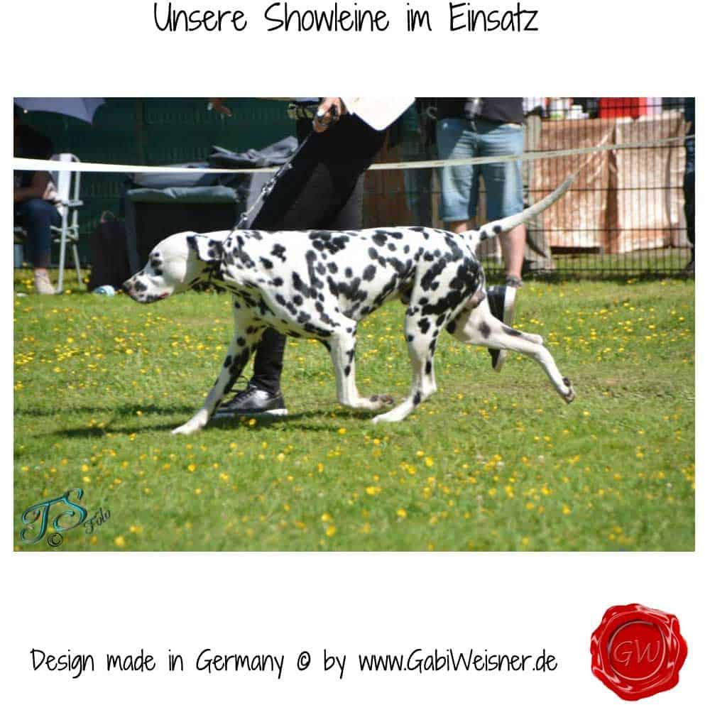 Unsere-Showleine-im-Einsatz–3