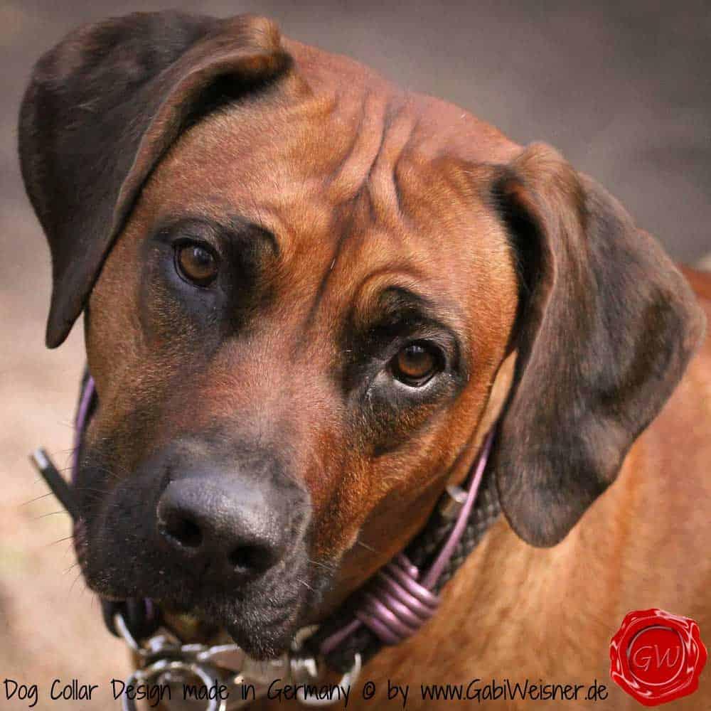 Hundehalsband-Leder-Mix-Ridgeback-lila-4