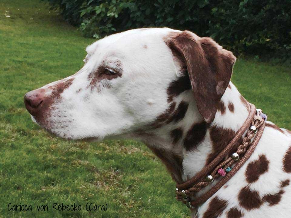 Luxus Hundehalsband Nappa Leder mit Strass