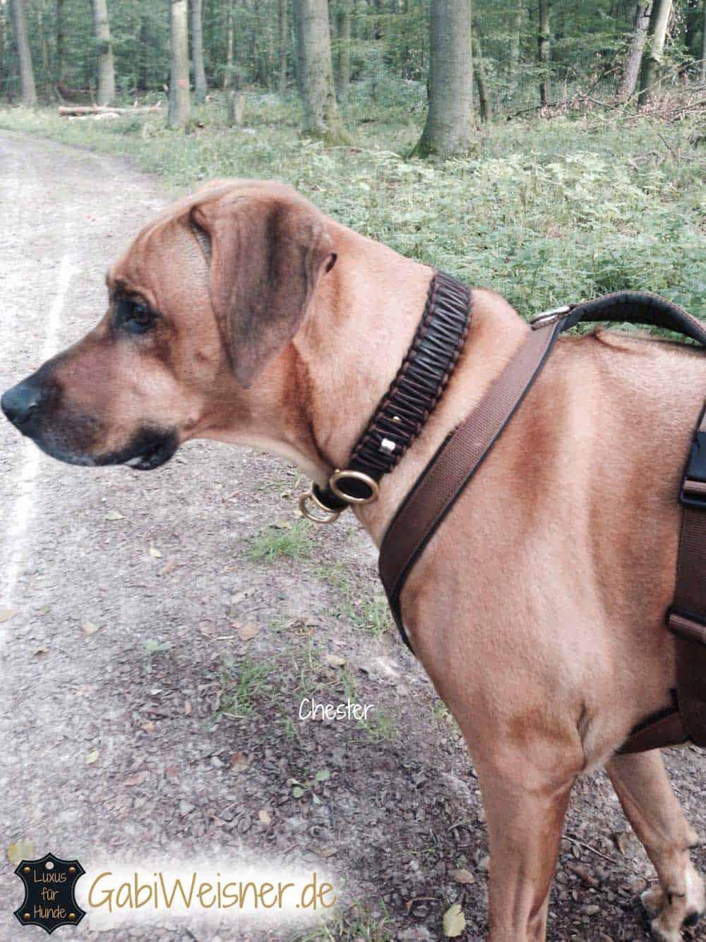 Hundehalsband Leder Zugstopp