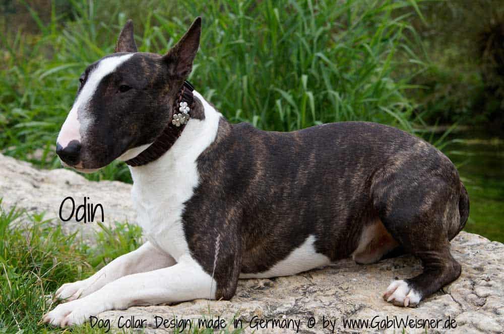 Hundehalsband-Leder-Original-Knotenhalsband-Odin-1