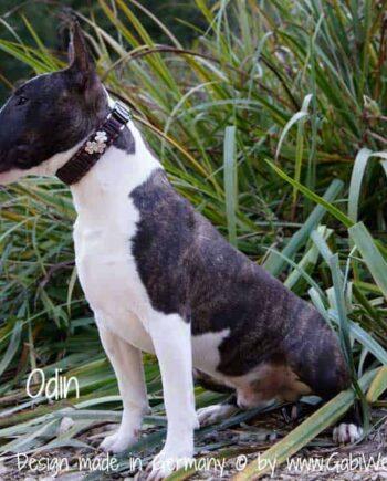 Hundehalsband mit SPRENGER CLICLOCK