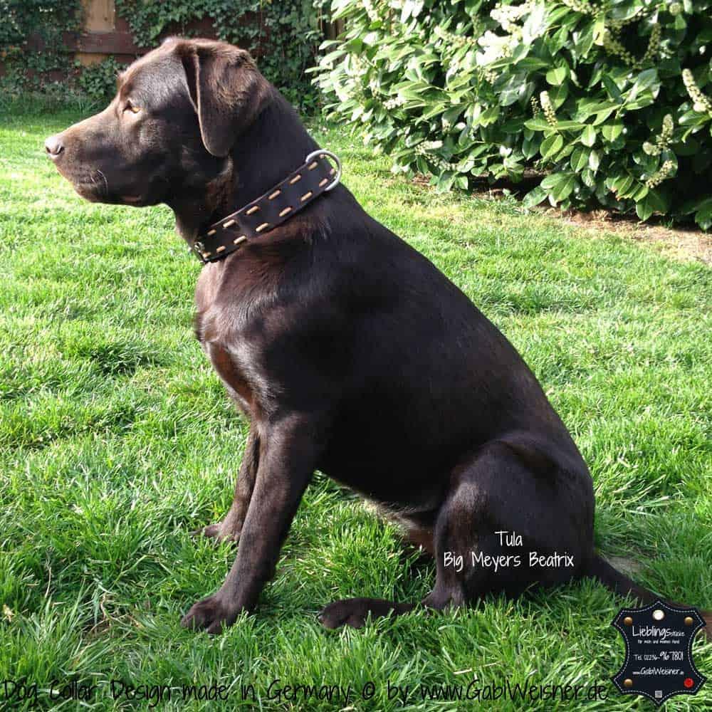 hundehalsband-leder-fettleder-braun-7