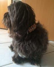 indianer-halsband-leder-3-cm-breit-kleine-hunde-6