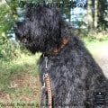 Hundehalsband Leder 4 cm breit Klickverschluss