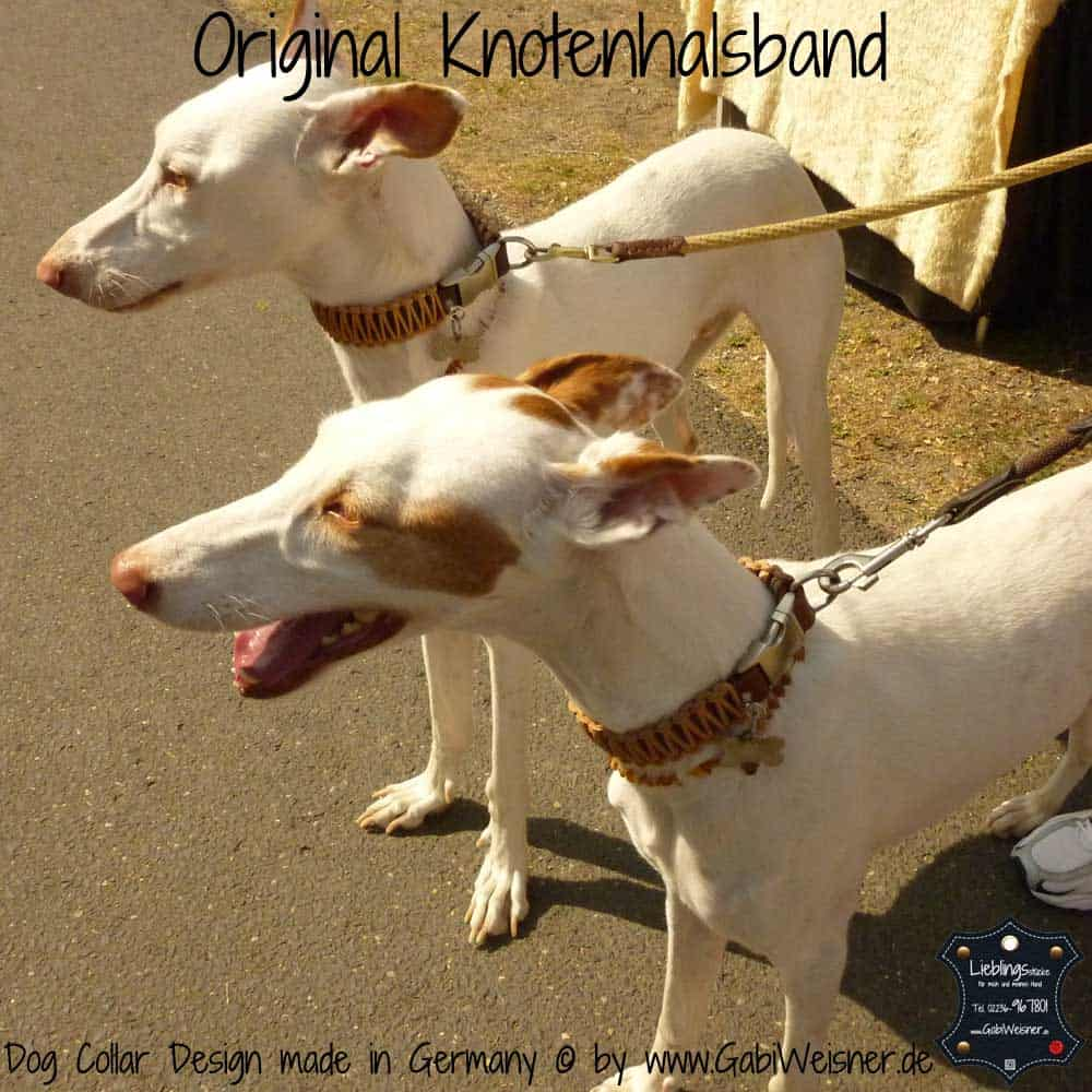 Hundehalsband-Leder-podenco