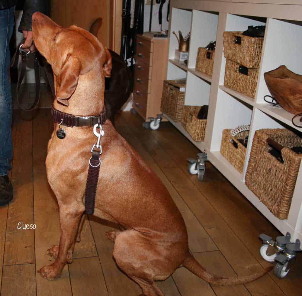 Hundehalsband Leder 4 cm breit geflochten, Klickverschluss braun