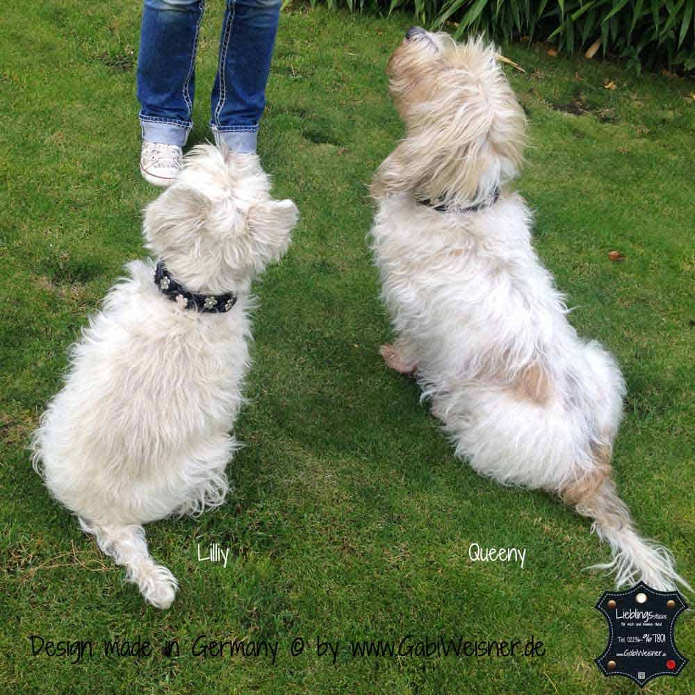 Hundehalsband-geflochten,-Leder-3-cm-breit-10