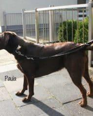hundehalsband-leder-4-cm-breit-geflochten-klickverschluss-paula