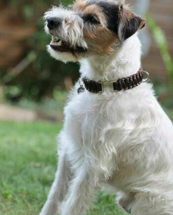 Lederhalsband kleine Hunde mit Klickverschluss