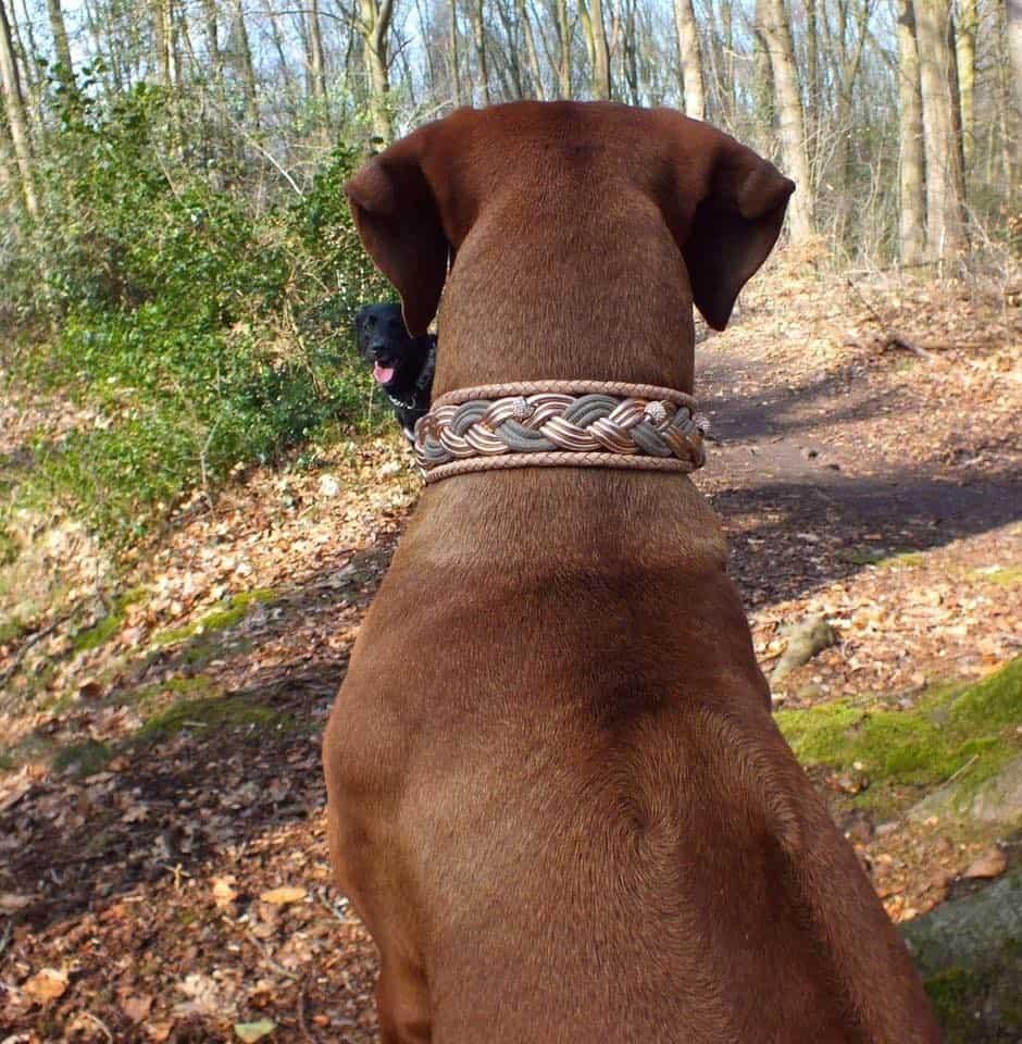 Hundehalsband Rosegold